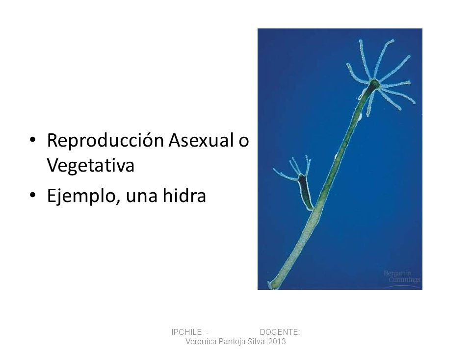 IPCHILE - DOCENTE: Veronica Pantoja Silva. 2013