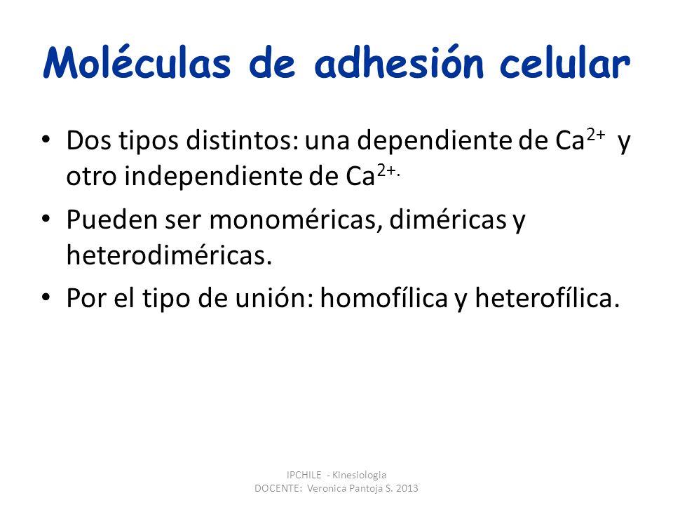 Moléculas de adhesión celular