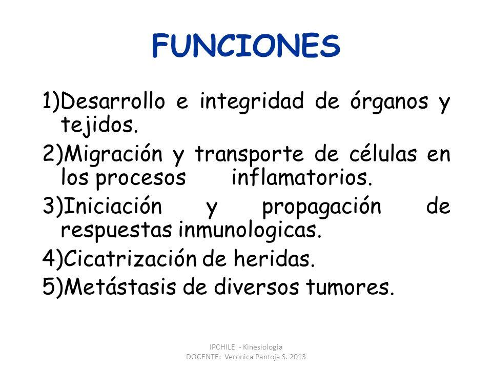 IPCHILE - Kinesiologia DOCENTE: Veronica Pantoja S. 2013