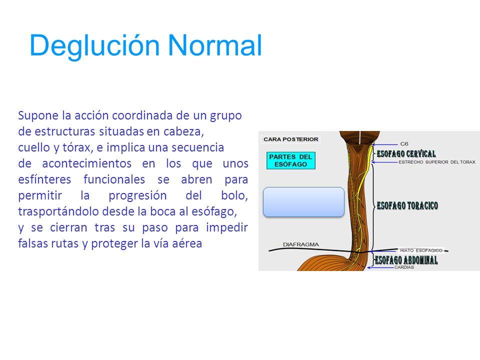 Deglución Normal Deglución Supone la acción coordinada de un grupo