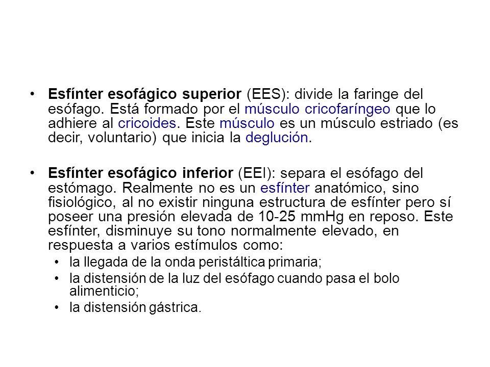 Esfínter esofágico superior (EES): divide la faringe del esófago