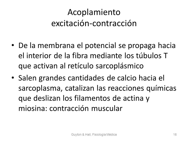Acoplamiento excitación-contracción