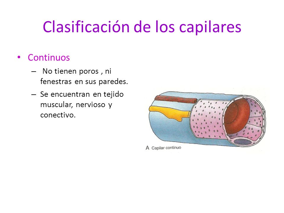 Clasificación de los capilares