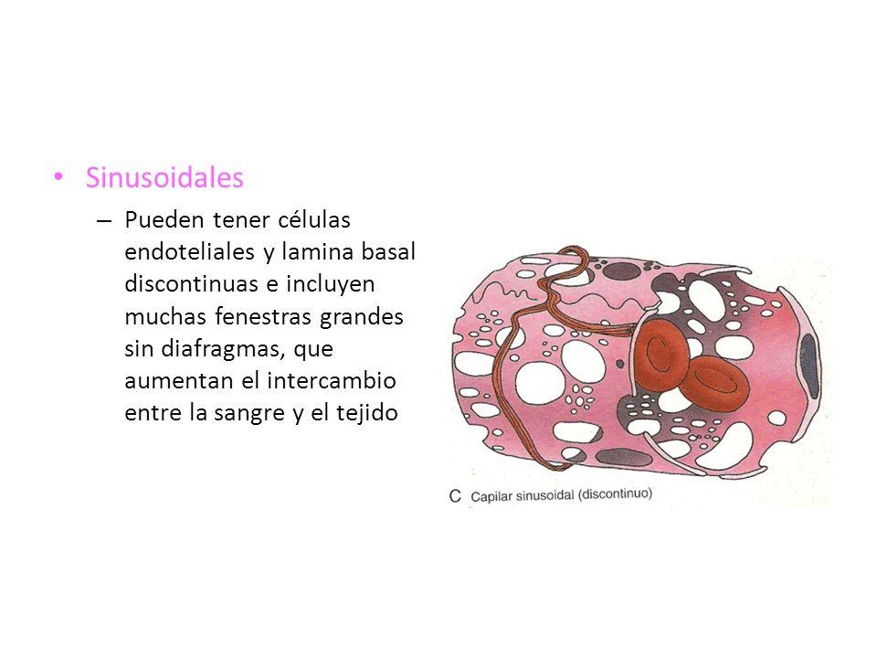 Sinusoidales