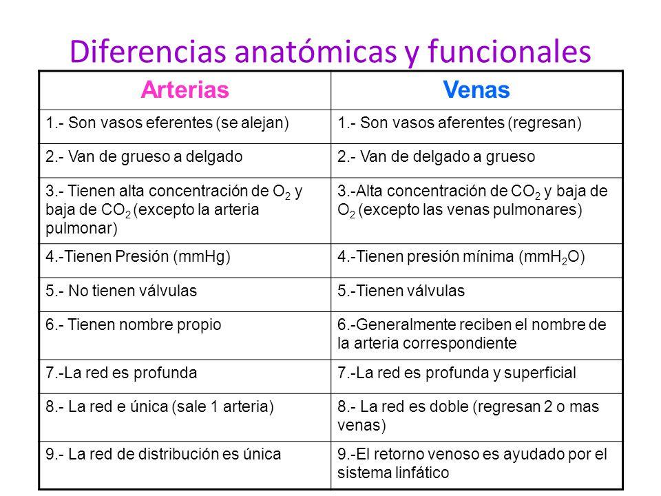 Diferencias anatómicas y funcionales