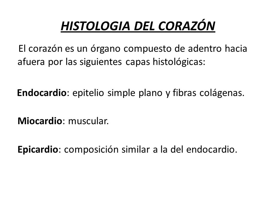 HISTOLOGIA DEL CORAZÓN