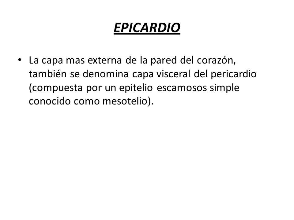 EPICARDIO