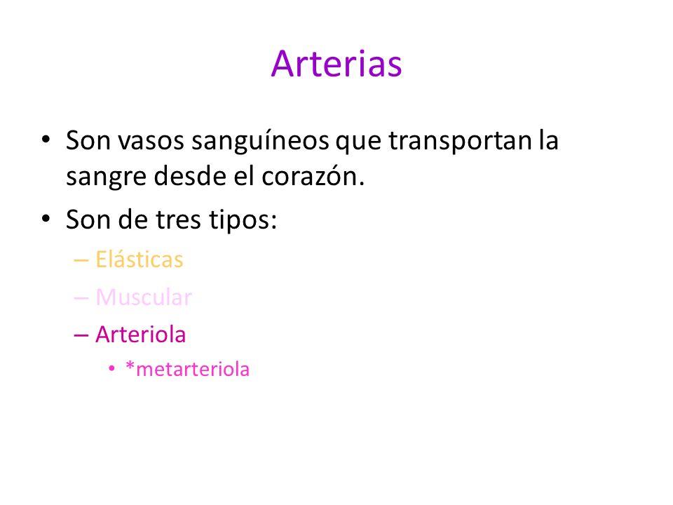 Arterias Son vasos sanguíneos que transportan la sangre desde el corazón. Son de tres tipos: Elásticas.