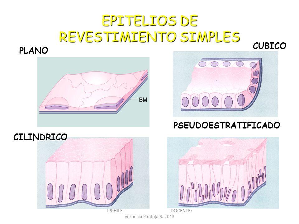 EPITELIOS DE REVESTIMIENTO SIMPLES