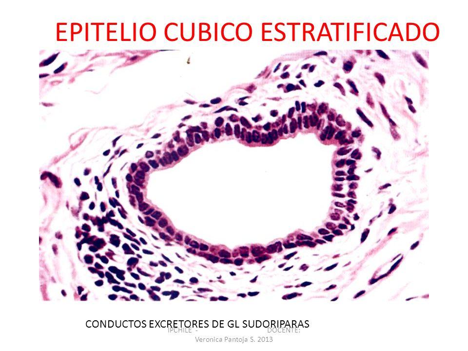 EPITELIO CUBICO ESTRATIFICADO