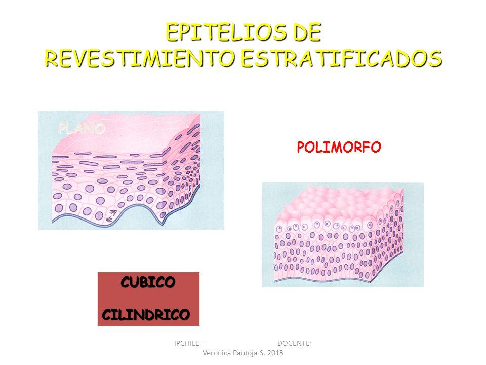 EPITELIOS DE REVESTIMIENTO ESTRATIFICADOS