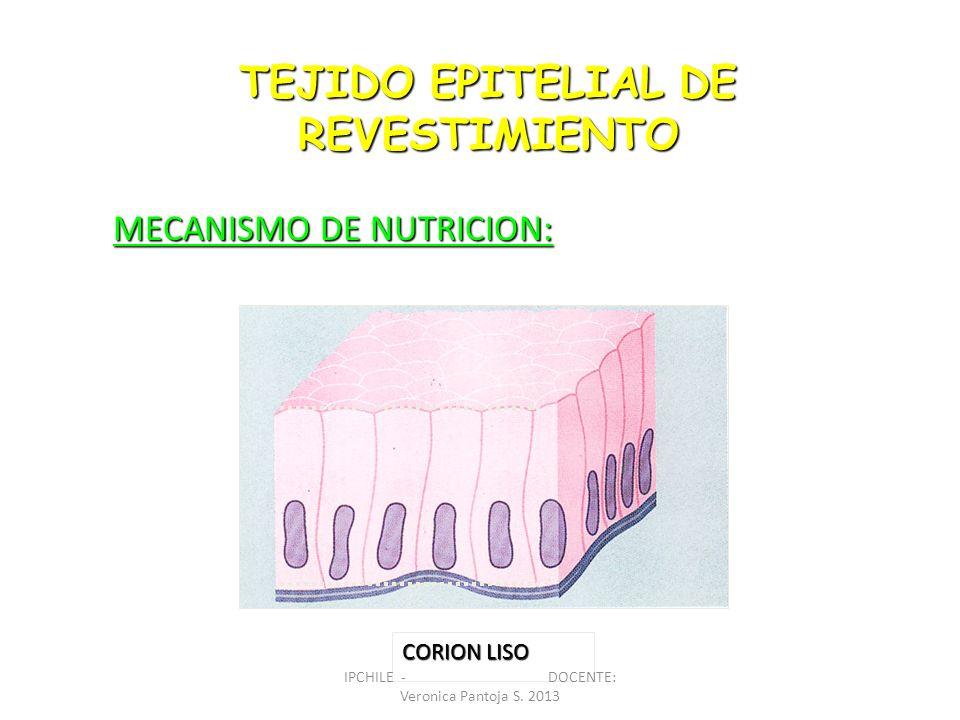 TEJIDO EPITELIAL DE REVESTIMIENTO