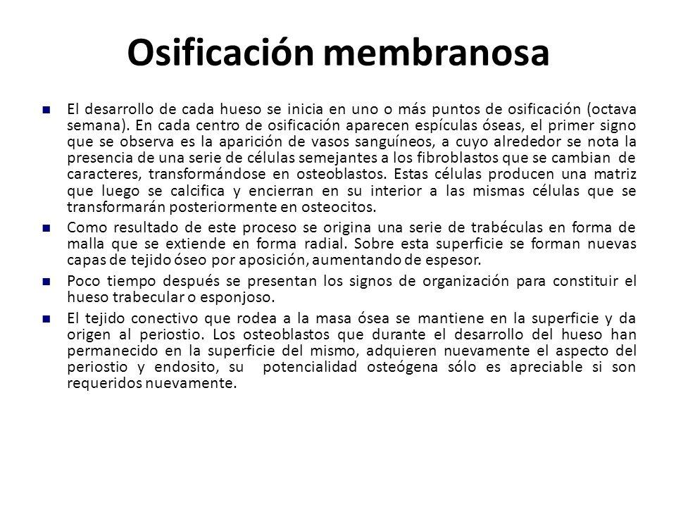 Osificación membranosa