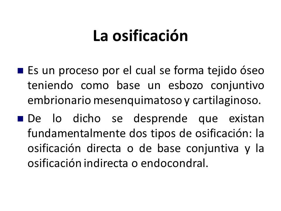 La osificación Es un proceso por el cual se forma tejido óseo teniendo como base un esbozo conjuntivo embrionario mesenquimatoso y cartilaginoso.