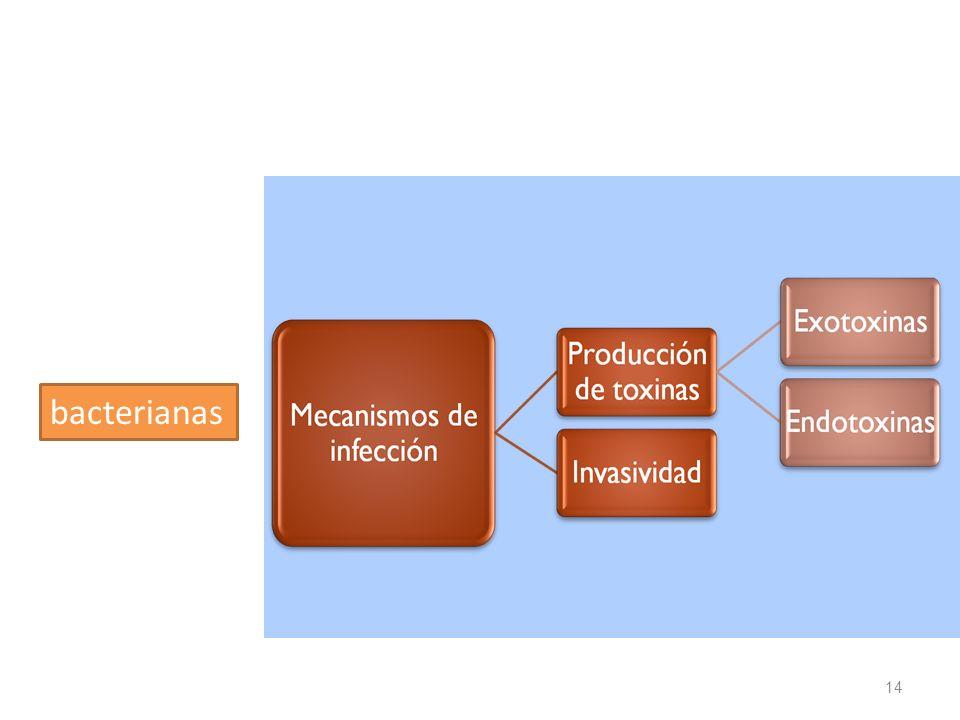 bacterianas