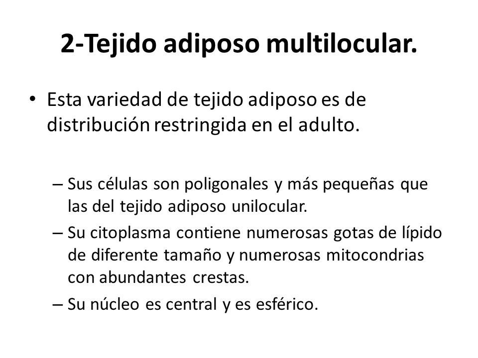 2-Tejido adiposo multilocular.