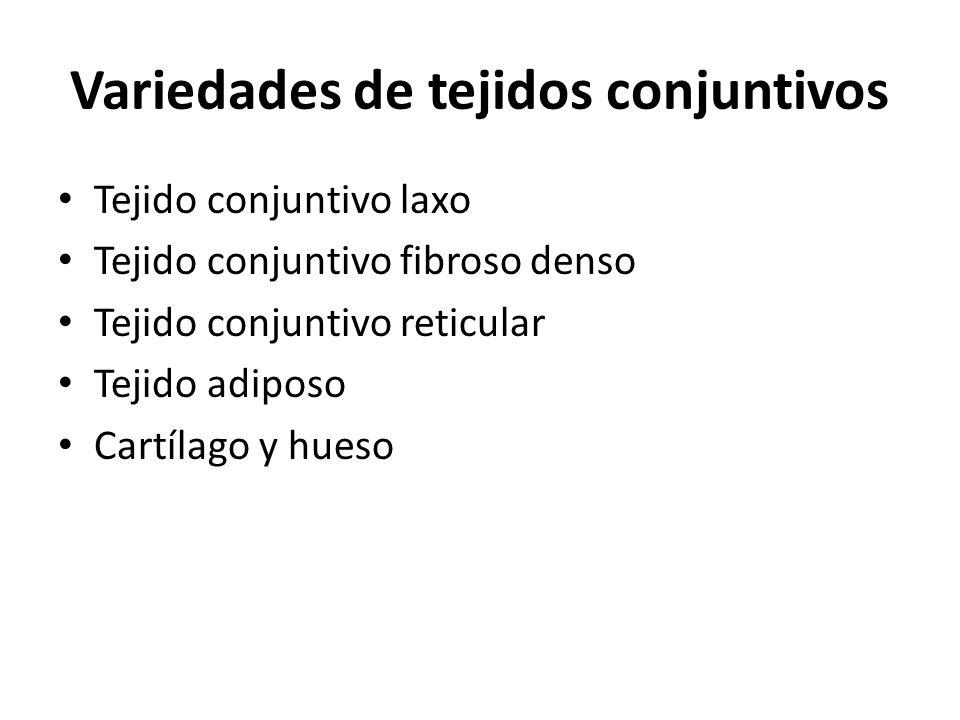 Variedades de tejidos conjuntivos