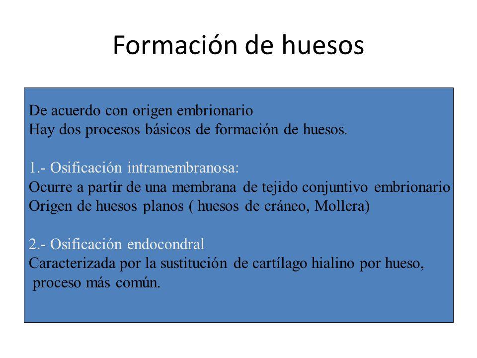 Formación de huesos De acuerdo con origen embrionario