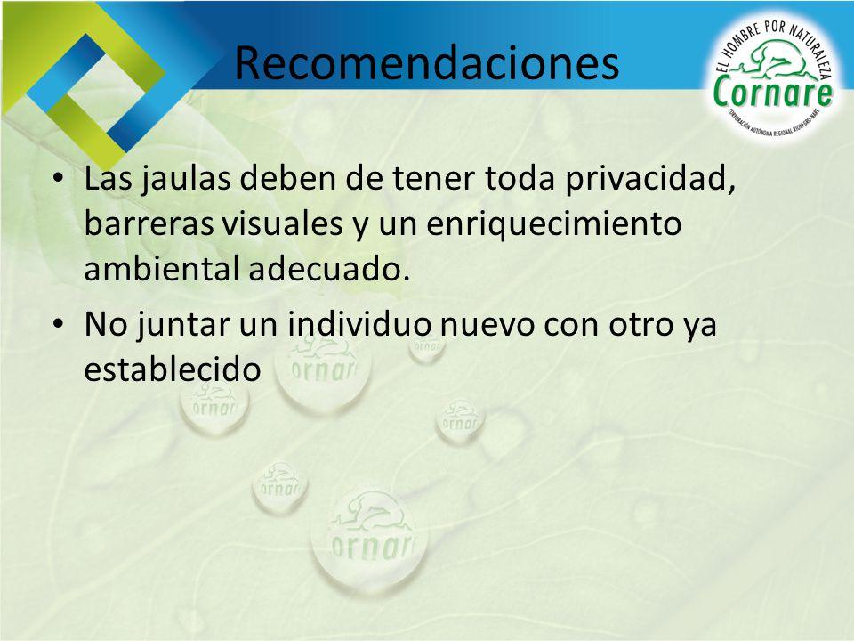 Recomendaciones Las jaulas deben de tener toda privacidad, barreras visuales y un enriquecimiento ambiental adecuado.