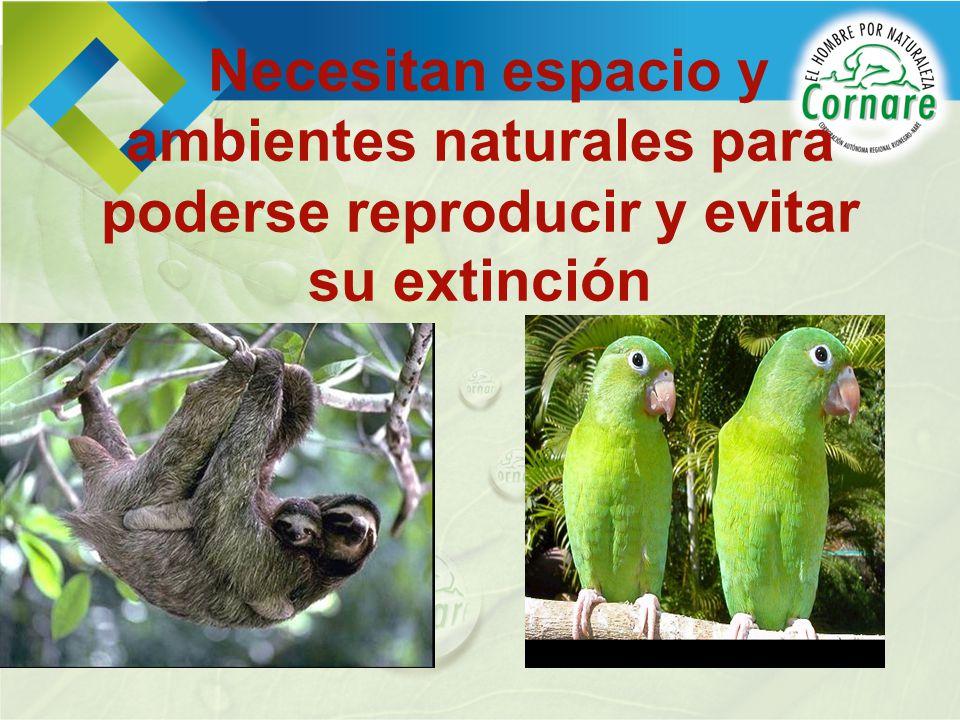 Necesitan espacio y ambientes naturales para poderse reproducir y evitar su extinción