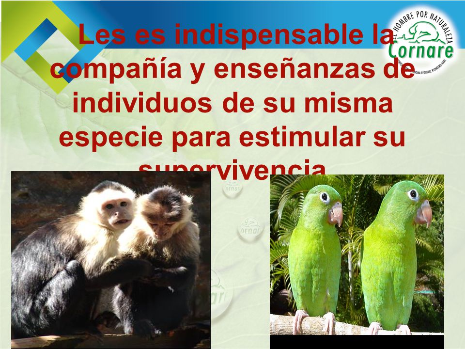 Les es indispensable la compañía y enseñanzas de individuos de su misma especie para estimular su supervivencia