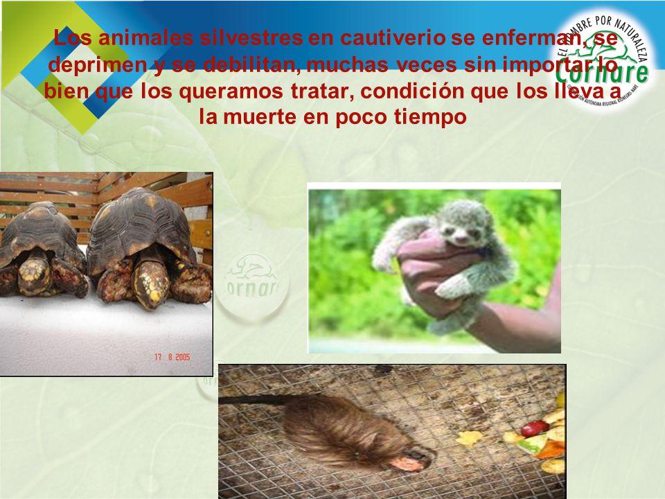 Los animales silvestres en cautiverio se enferman, se deprimen y se debilitan, muchas veces sin importar lo bien que los queramos tratar, condición que los lleva a la muerte en poco tiempo