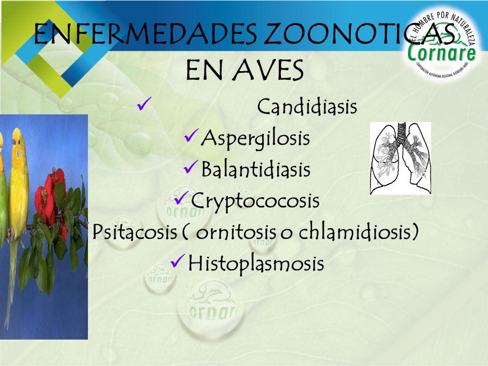 ENFERMEDADES ZOONOTICAS EN AVES