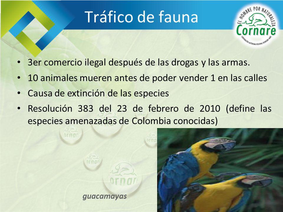 Tráfico de fauna 3er comercio ilegal después de las drogas y las armas. 10 animales mueren antes de poder vender 1 en las calles.