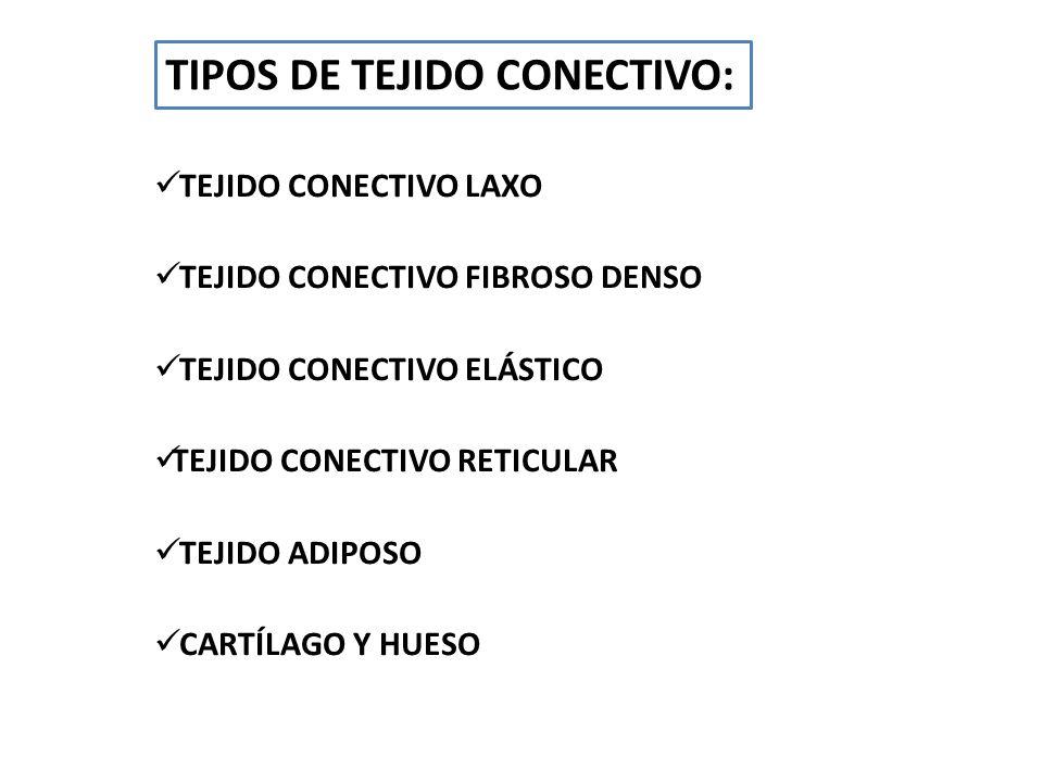 TIPOS DE TEJIDO CONECTIVO: