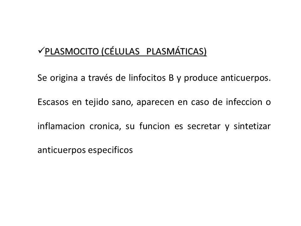 PLASMOCITO (CÉLULAS PLASMÁTICAS)