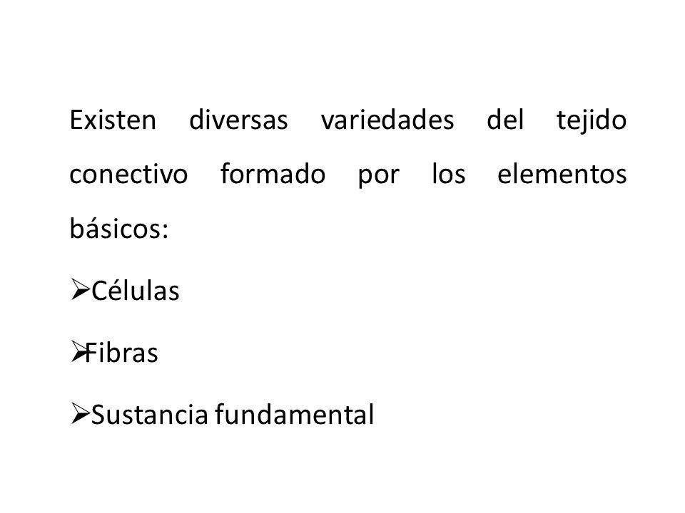 Existen diversas variedades del tejido conectivo formado por los elementos básicos:
