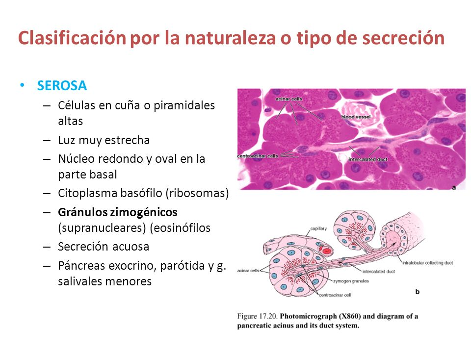 Clasificación por la naturaleza o tipo de secreción