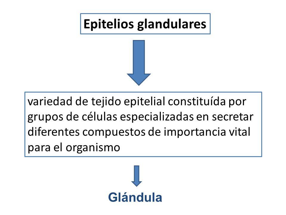 Epitelios glandulares