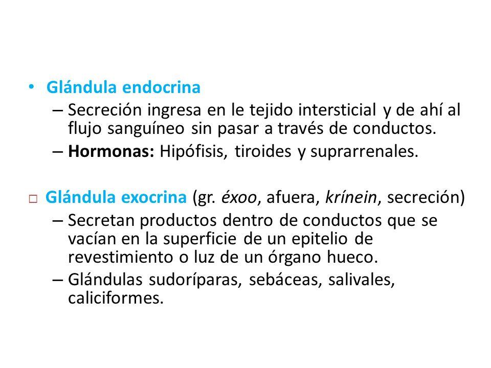 Glándula endocrina Secreción ingresa en le tejido intersticial y de ahí al flujo sanguíneo sin pasar a través de conductos.