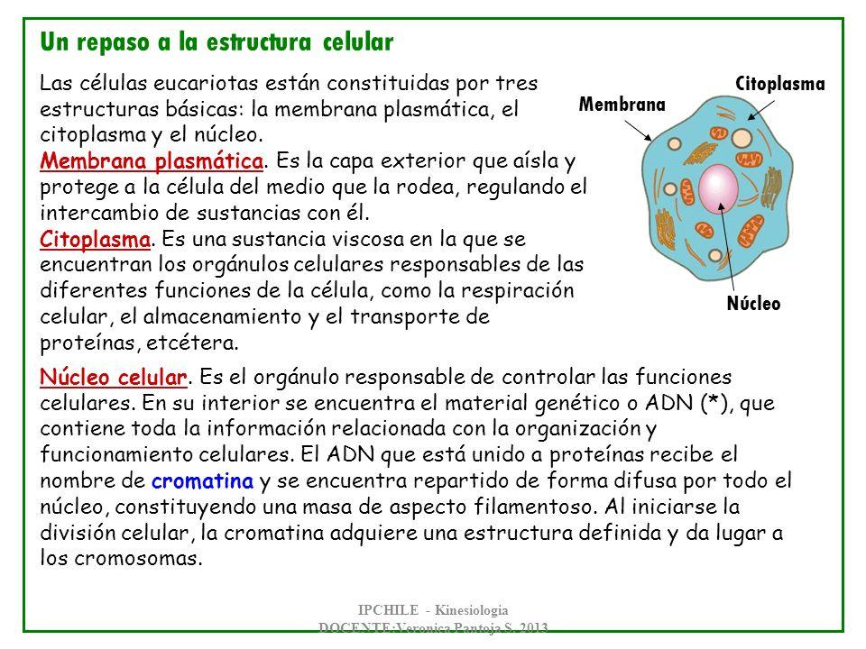 IPCHILE - Kinesiologia DOCENTE:Veronica Pantoja S. 2013