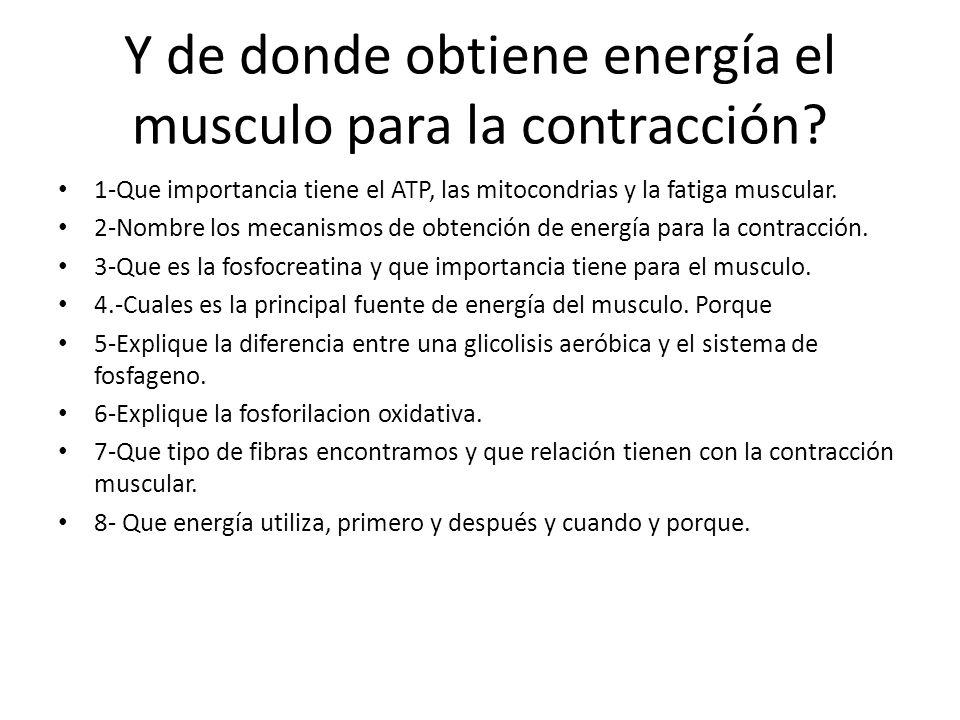 Y de donde obtiene energía el musculo para la contracción
