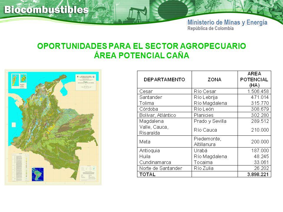OPORTUNIDADES PARA EL SECTOR AGROPECUARIO ÁREA POTENCIAL CAÑA