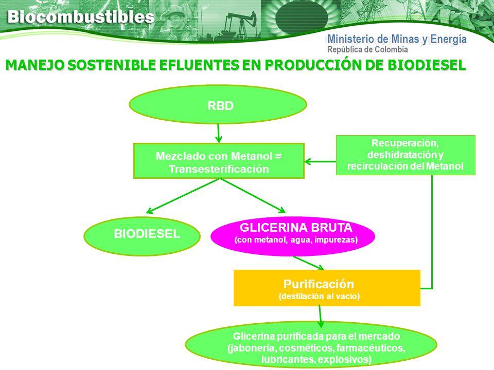MANEJO SOSTENIBLE EFLUENTES EN PRODUCCIÓN DE BIODIESEL
