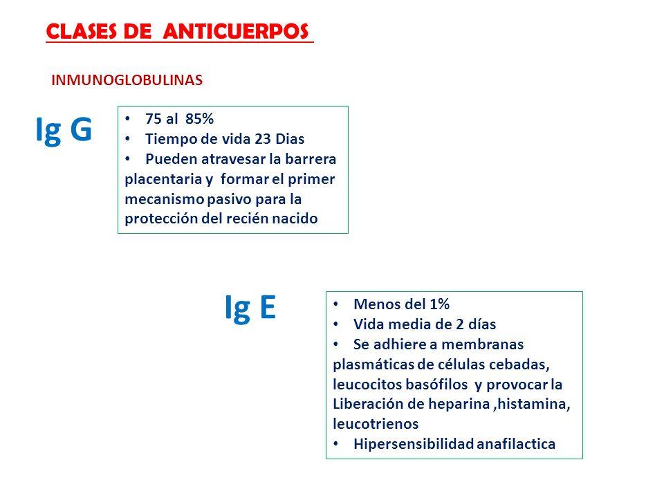 Ig G Ig E CLASES DE ANTICUERPOS INMUNOGLOBULINAS 75 al 85%