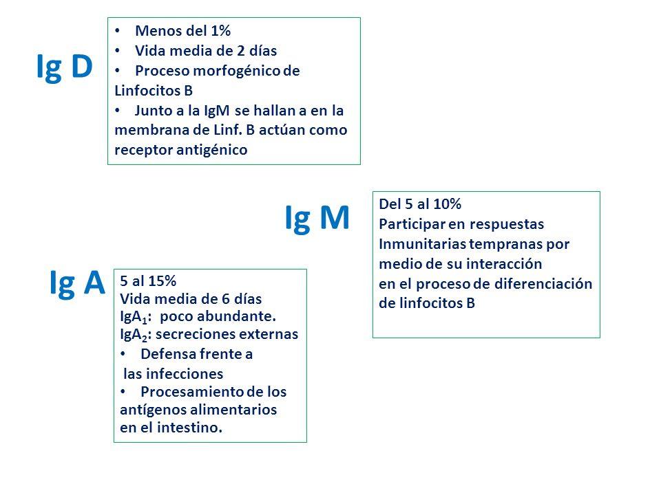Ig D Ig M Ig A Menos del 1% Vida media de 2 días