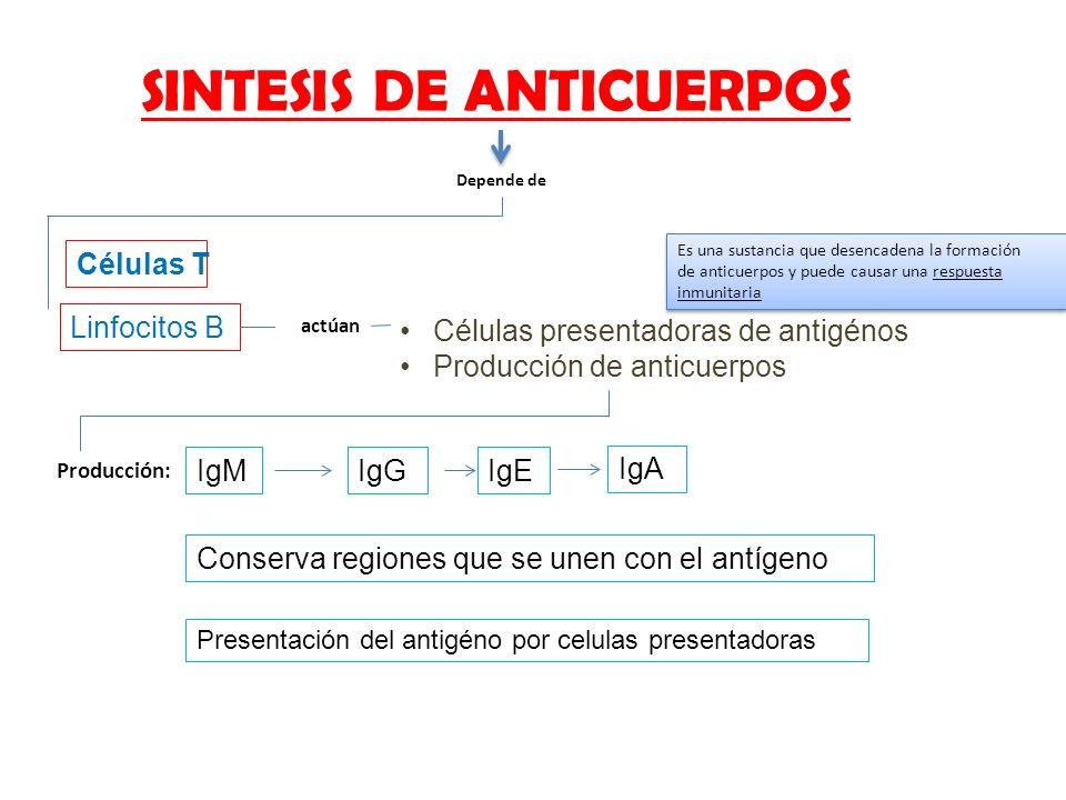 SINTESIS DE ANTICUERPOS