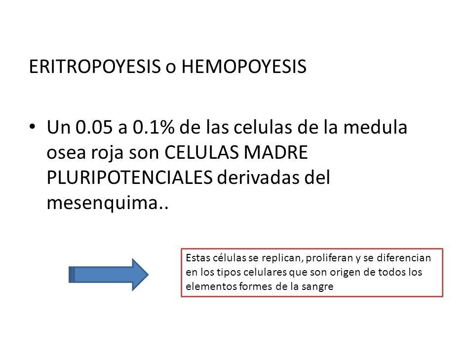 ERITROPOYESIS o HEMOPOYESIS
