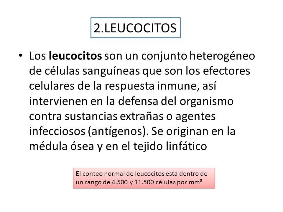 2.LEUCOCITOS