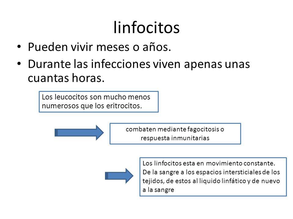combaten mediante fagocitosis o respuesta inmunitarias