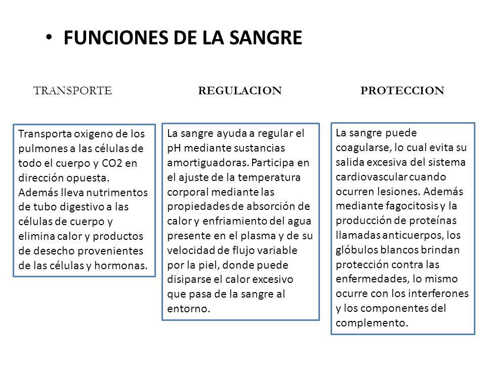 FUNCIONES DE LA SANGRE TRANSPORTE REGULACION PROTECCION
