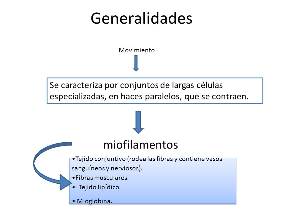 Generalidades miofilamentos
