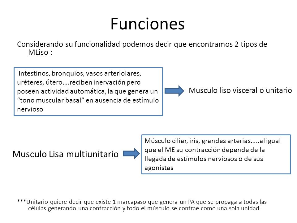 Funciones Musculo Lisa multiunitario