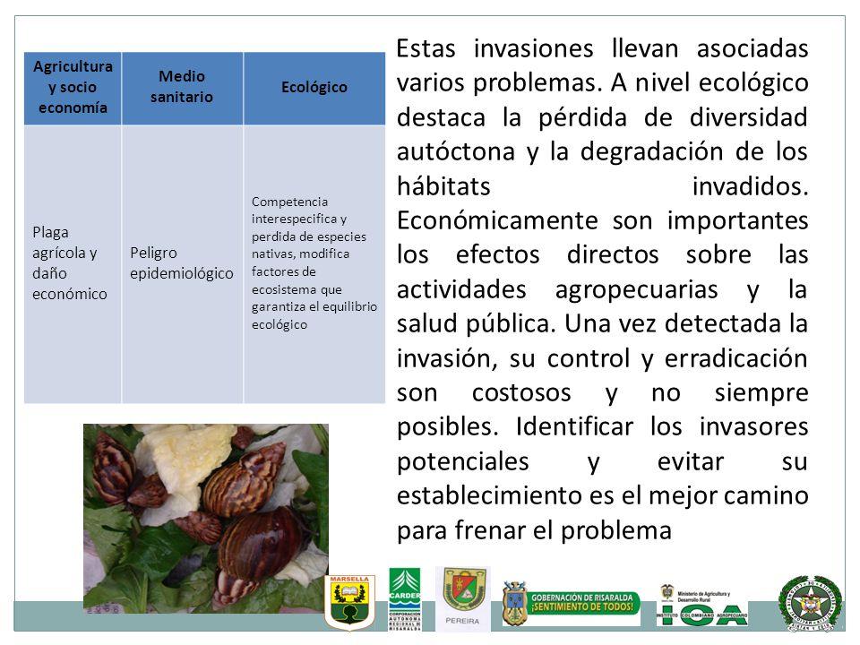 Agricultura y socio economía