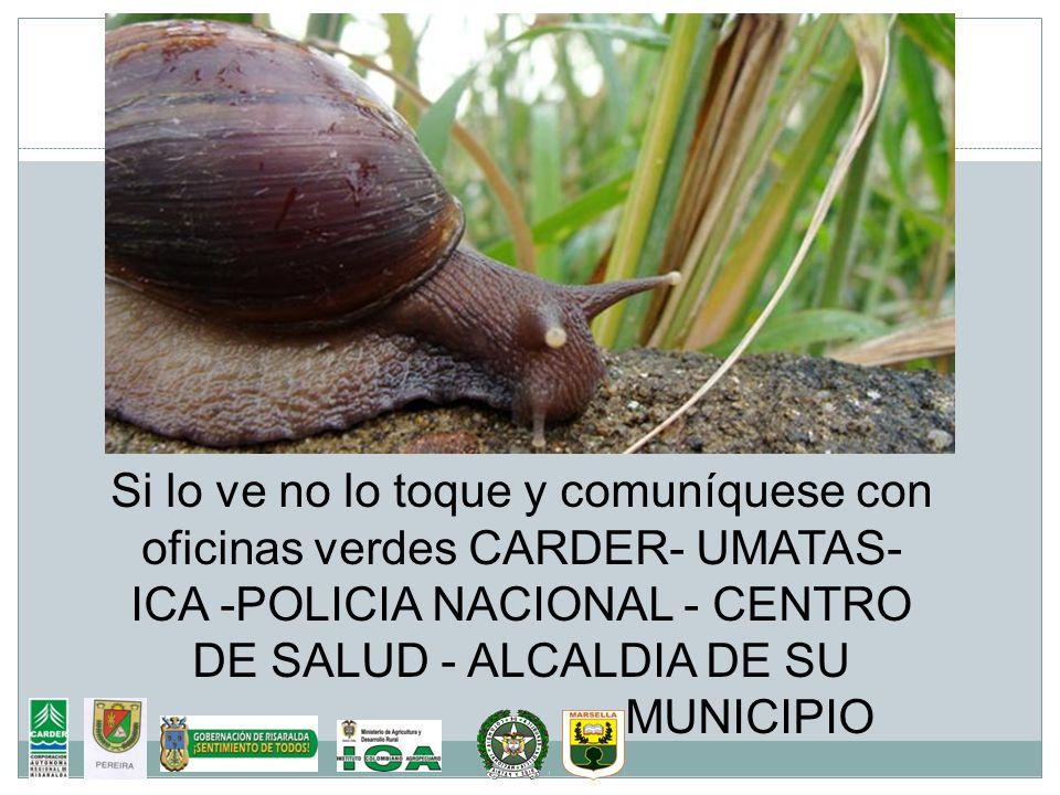 Si lo ve no lo toque y comuníquese con oficinas verdes CARDER- UMATAS- ICA -POLICIA NACIONAL - CENTRO DE SALUD - ALCALDIA DE SU