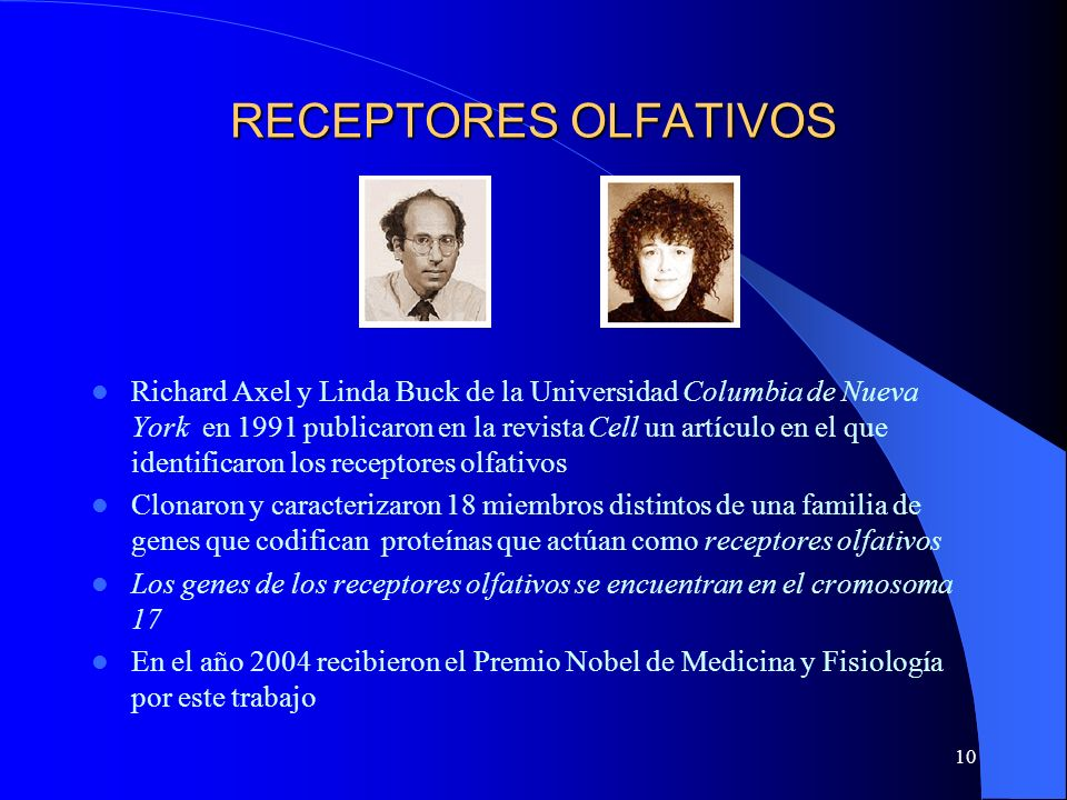 RECEPTORES OLFATIVOS